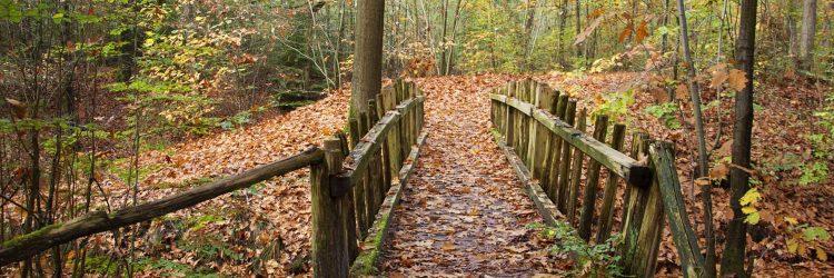 Herfst-bos-bruggetje